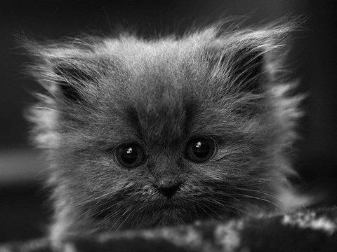 Бог создал животных, чтобы отогревать наши холодные сердца