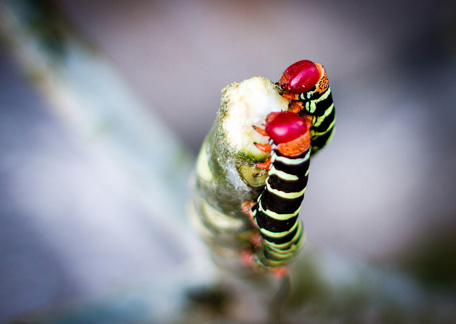 Гусеницы «шелестят» анусами, чтобы завести друзей