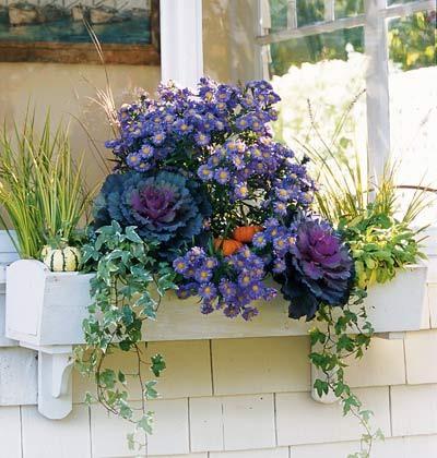 Контейнерные растения за окном