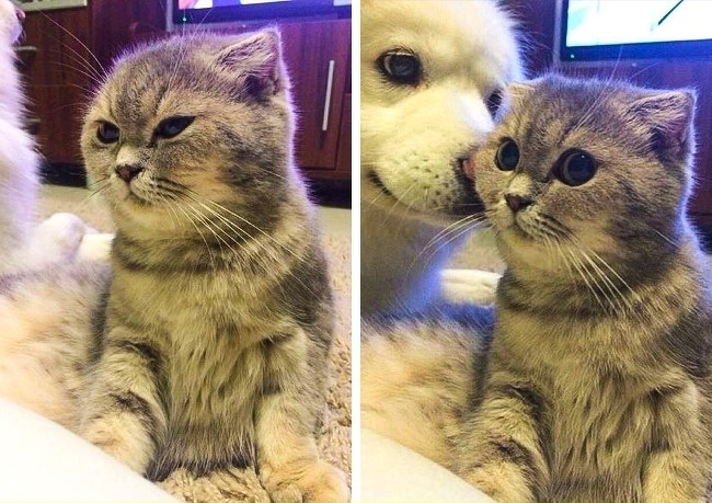 14 раз, когда животные не могли скрыть своих эмоций