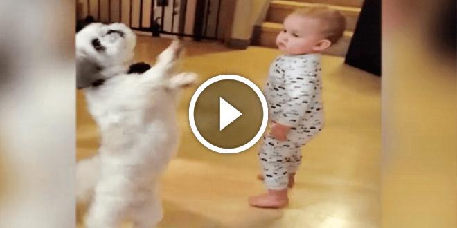 Очаровательный песик танцует вместе с малышом