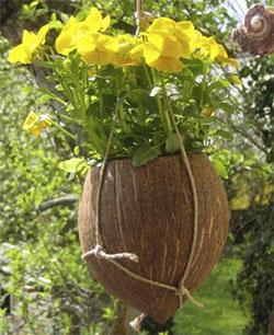 Цветочные горшки из кокоса