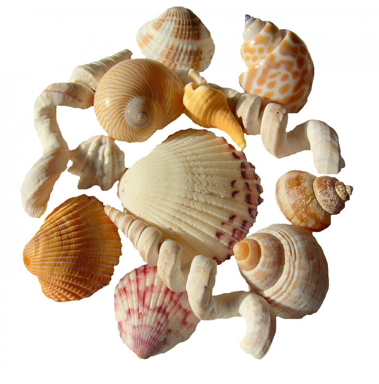 Картинки по запросу малайзия кораллы и ракушки