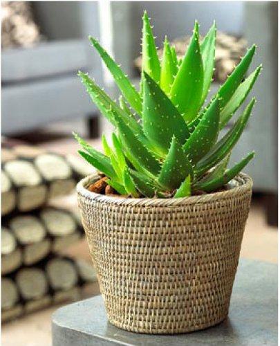 4 комнатных растения, которы…