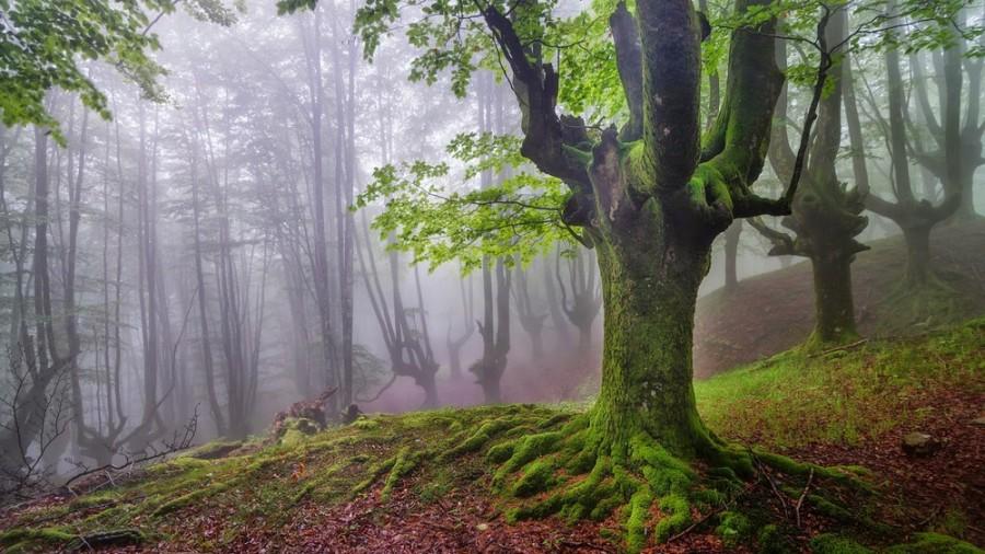 Мистический лес в Испании