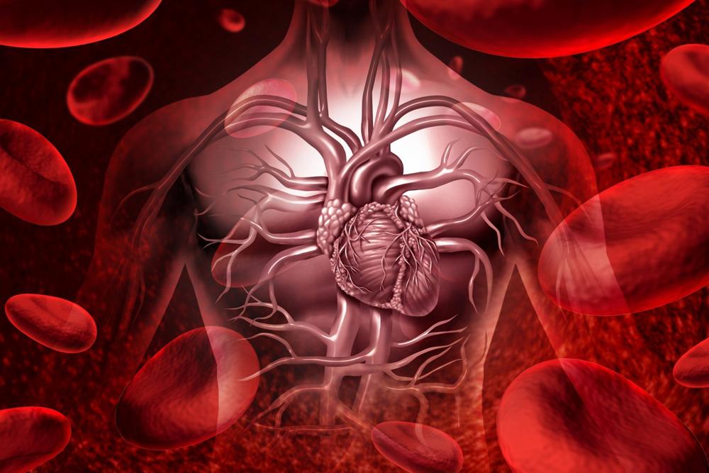 5 растений для улучшения кровообращения