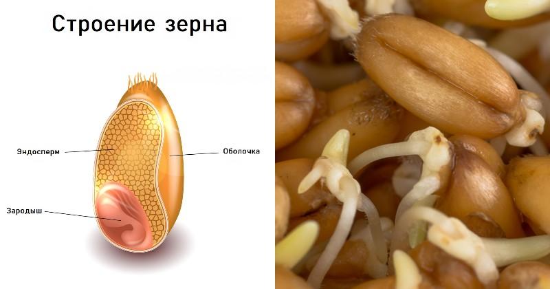 самые полезные семена для организма