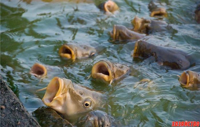 Осенние подкормки для рыбы