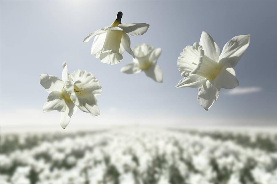 Великолепная серия фотографий «Цветы в невесомости»