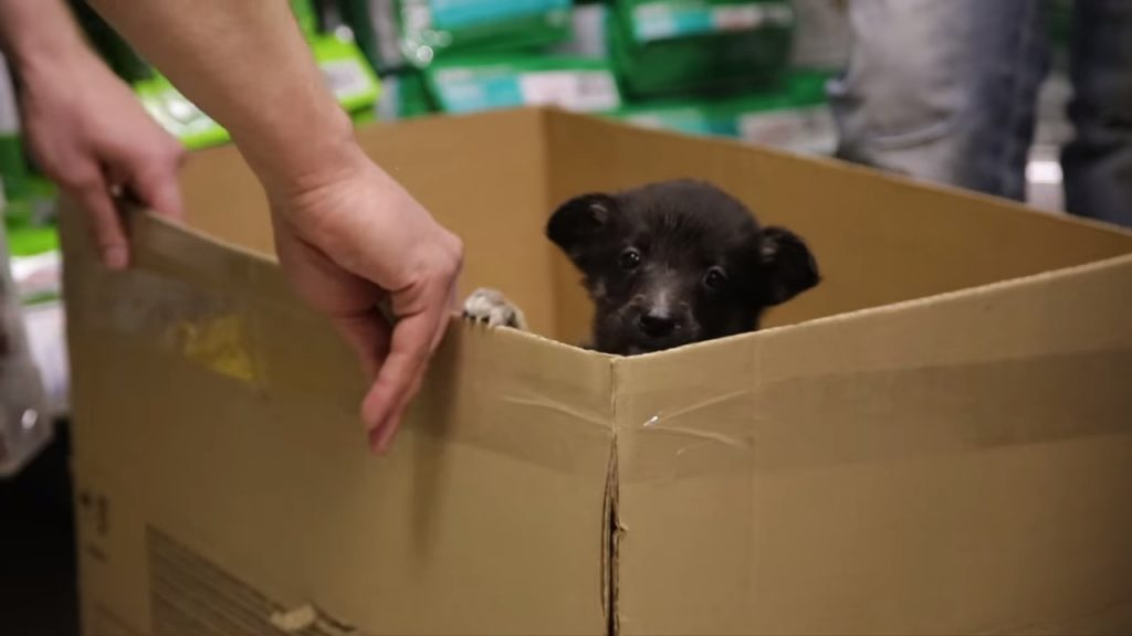 Продавец поинтересовался зачем парню больной щенок и предложил забрать его бесплатно. Каждый должен увидеть этот короткий фильм