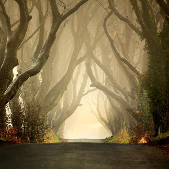 Таинственный лес в тумане. Фото аллеи буков в Ирландии