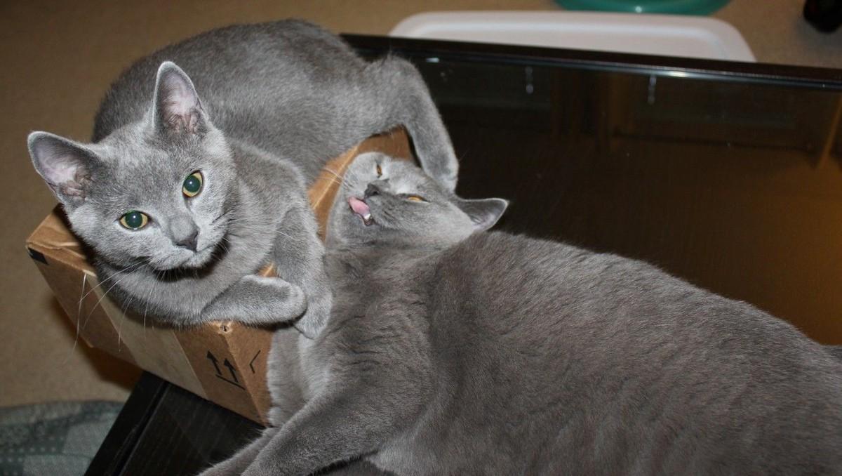 catrules12 15 правил жизни настоящего кота