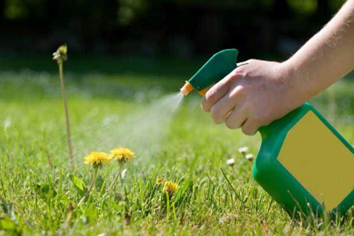 Как без химии избавиться от сорняков