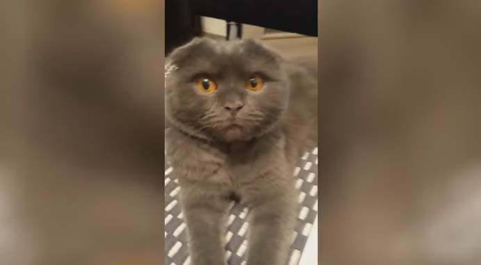 Кот провинился. Реакция на поездку к бабушке