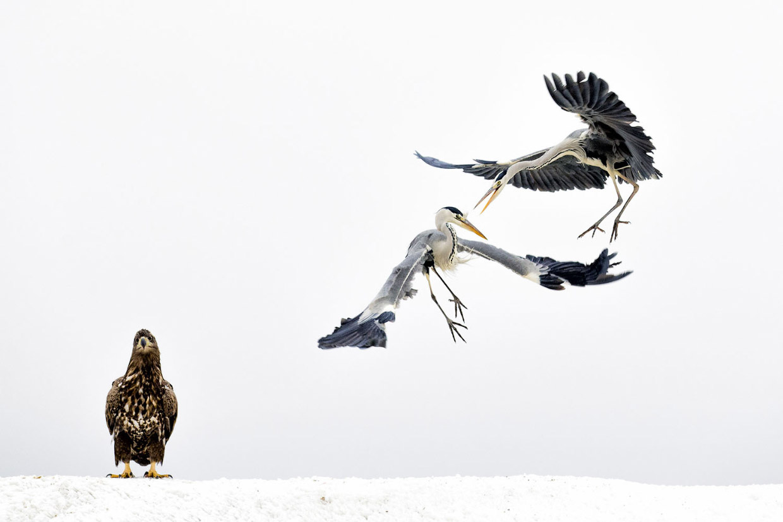 Фотографии победителей National Geographic Nature Photographer 2017