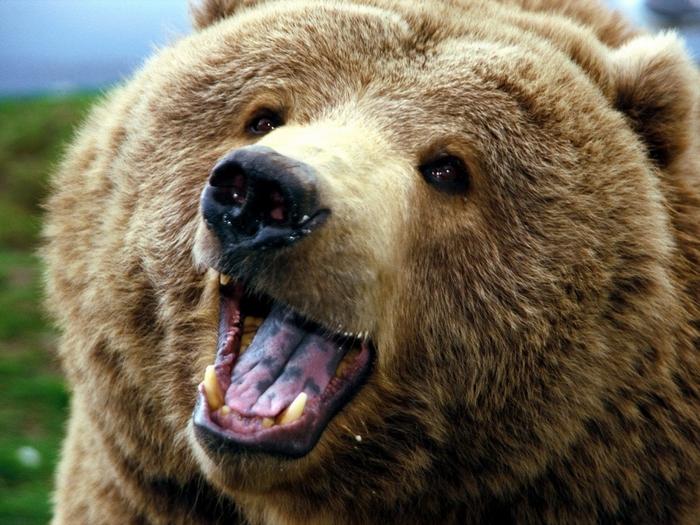 Лесоруба поцеловал медведь