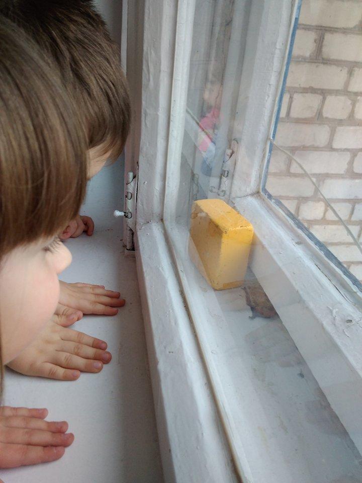 «А что это за пятачки с крыльями?» Ребята из детского сада г. Запорожья вдруг заметили в группе необычных животных