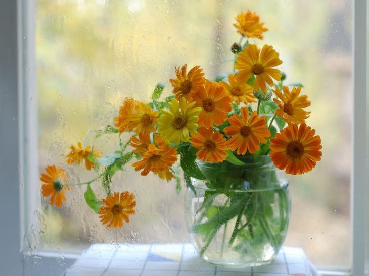 красивые цветы календулы в вазе на окне