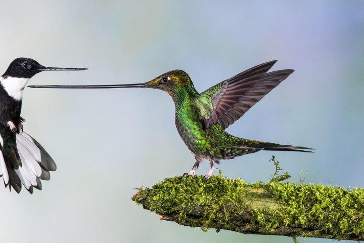 «Туше», Ян ван дер Гриф лучшие фотографии дикой природы 2014 года