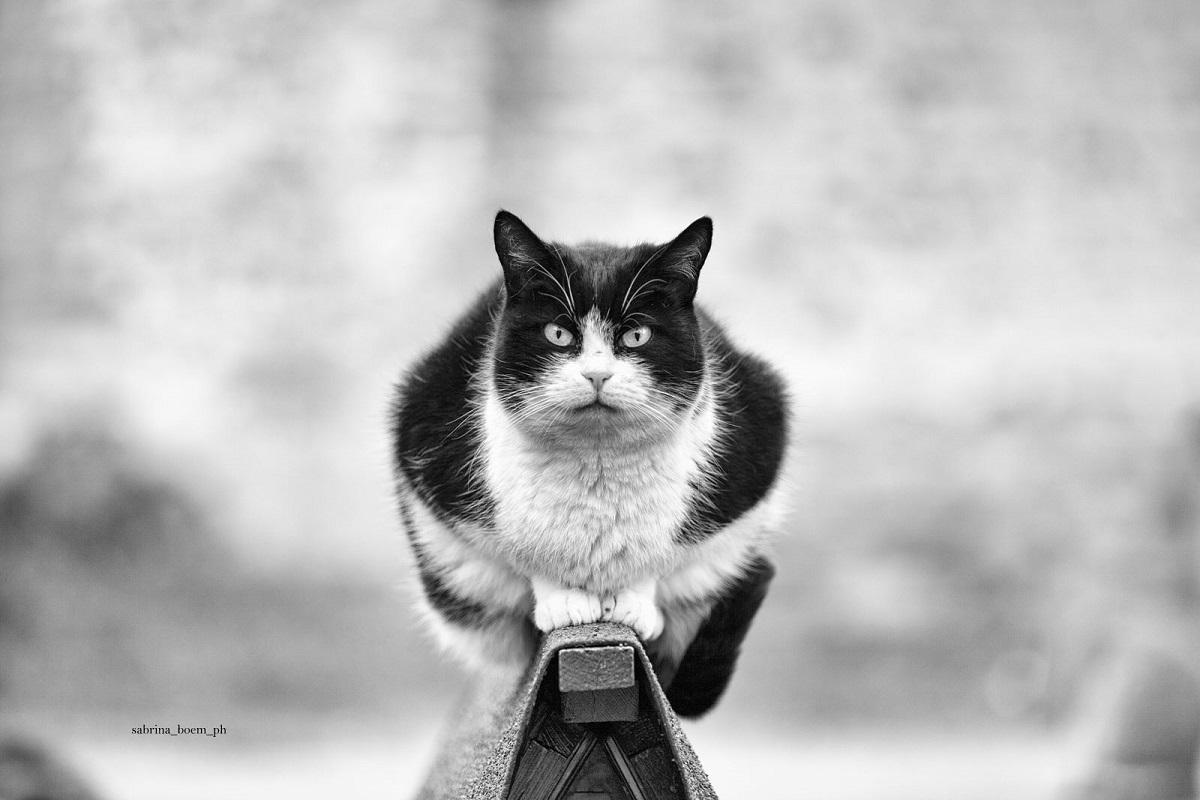 Монорельсовые кошки