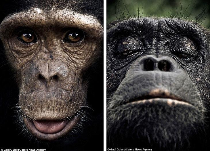 Эмоции обезьян на  фотографиях