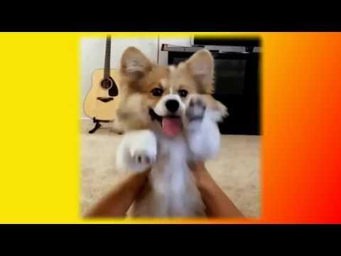 Смешные приколы про кошек и собак Смешные животные Создай себе хорошее настроение