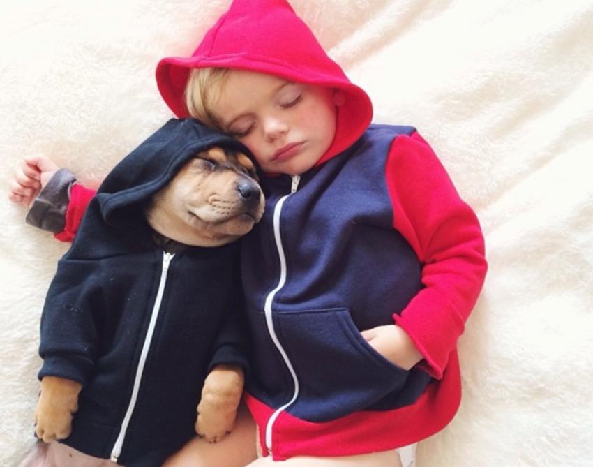 Muchacho, Milota, perro, perro, perrito, bebé