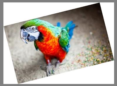 Как повернуть изображение или фото в проводнике Windows 10