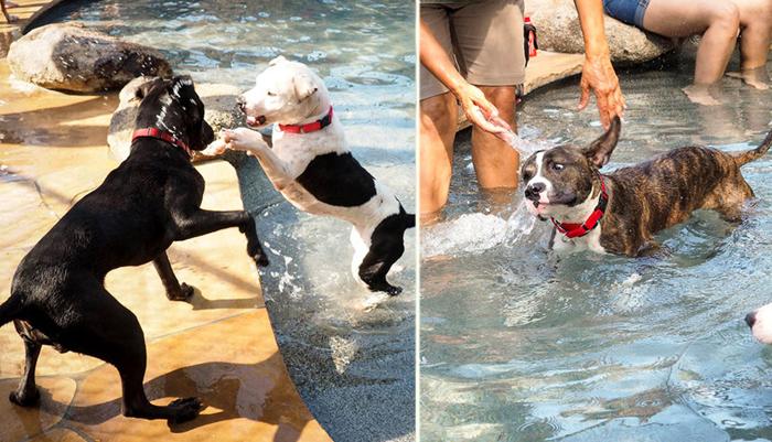 Бассейн для собак: в приюте для бездомных животных решили устроить вечеринку у бассейна