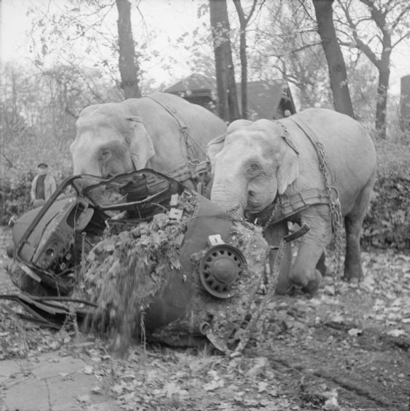 Цирковые слоны Кири и Мэни участвуют в уборке мусора с улиц разбомбленного Гамбурга, Германия, ноябрь 1945 года.