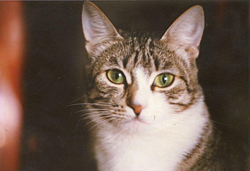 Кошачий героизм: на что идут кошки ради спасения хозяев