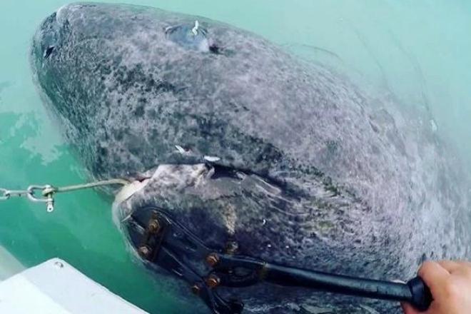 Рыбалка обернулась внезапным кошмаром: из воды на людей взглянуло древнее чудовище
