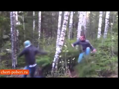 Вальщики леса