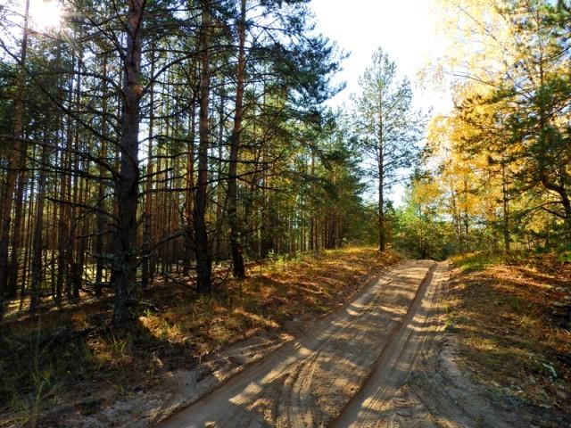 Прогулка по лесу с ножом, фотоаппаратом и ведром
