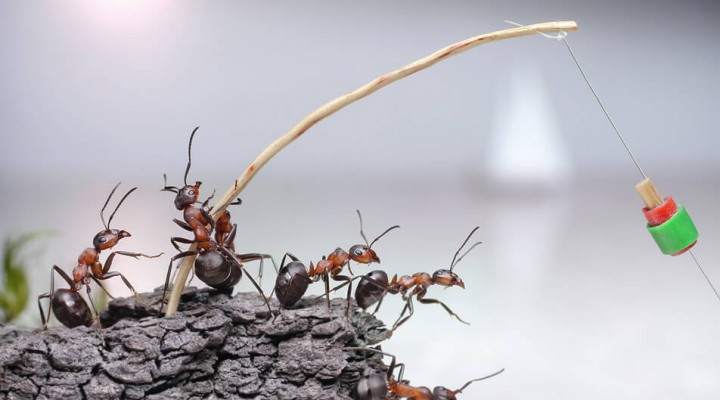 Ловля на муравьев и муравьиные яйца