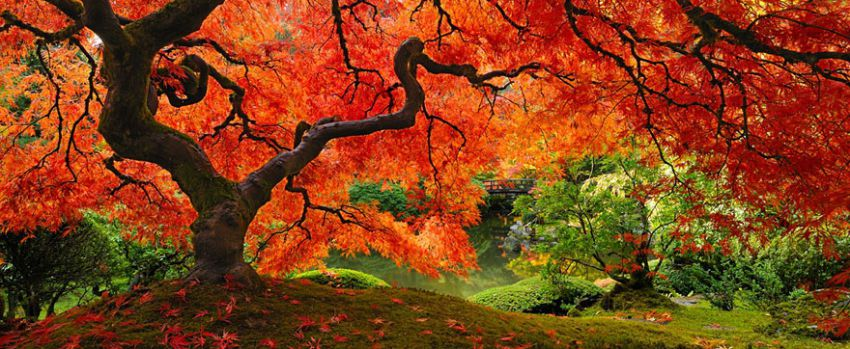 16 самых красивых и величественных деревьев планеты деревья, дуб, планета, клён