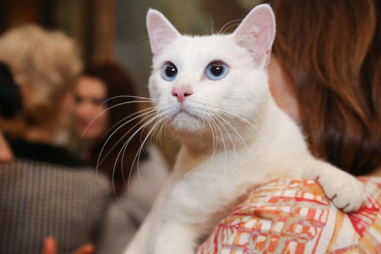 Эрмитажный кот Ахилл получит награду за популяризацию туризма