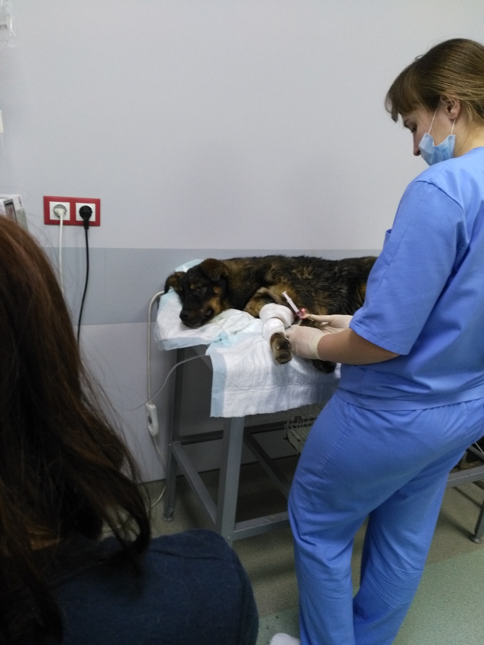 2 истории о погубленных щенках, которых вырвали из лап смерти