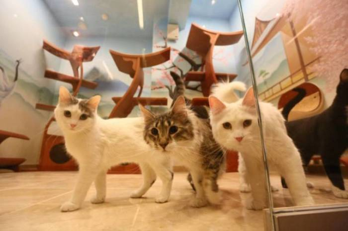 К кошкам в семье особое отношение. / Фото: /www.yamoskva.com