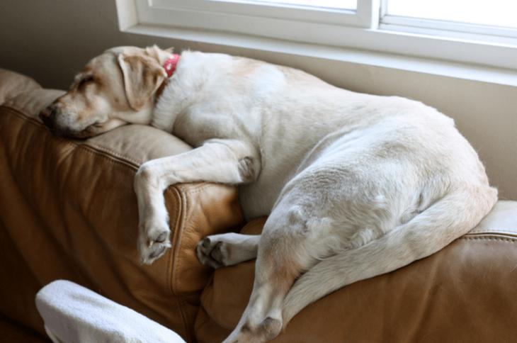 И собаки могут заснуть перед телевизором животные, мило, питомцы, подборка, смешное, собаки, сон, фото