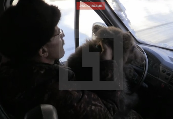 Челябинец, спасший от живодёров медвежонка Стёпу, научил его водить машину