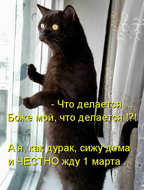 1 МАРТА - ВСЕМИРНЫЙ ДЕНЬ КОШЕК!