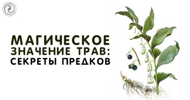 Магическое значение трав: секреты предков
