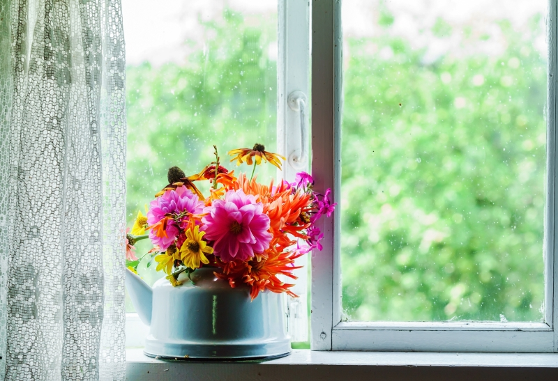 тенелюбивые растения для дома