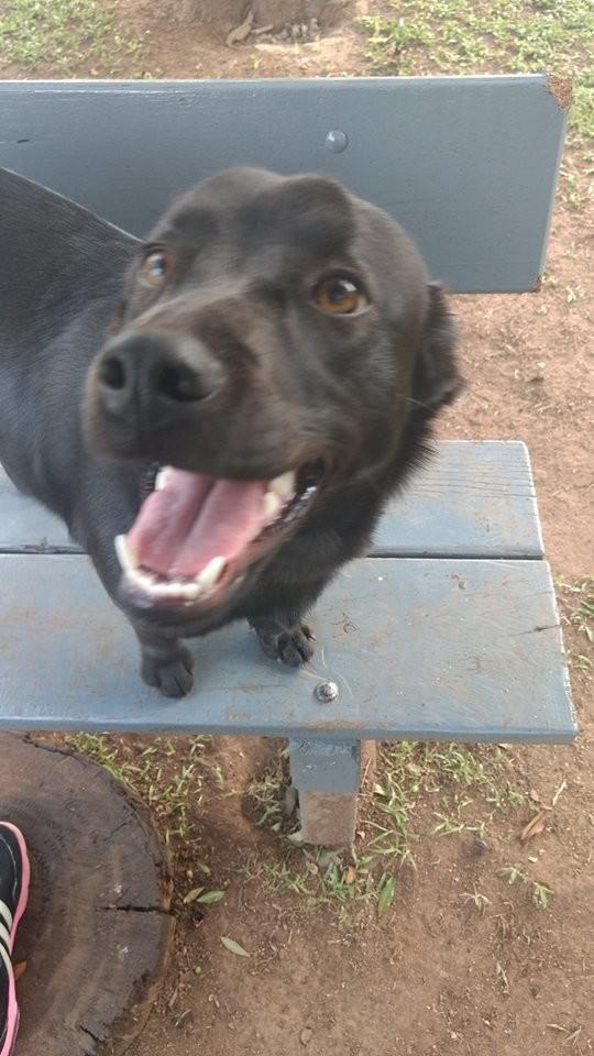 Знакомьтесь, эту собаку зовут Лана и она хорошо знает, что такое дружба и как это быть щедрым бразилия, в мире, дружба, животные, милота, помощь, собака