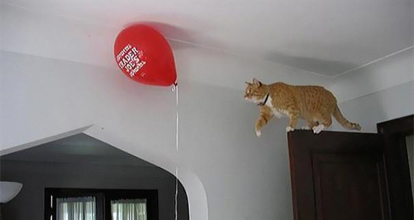20. Кошачий разум никогда не дремлет животные, кошка, логика