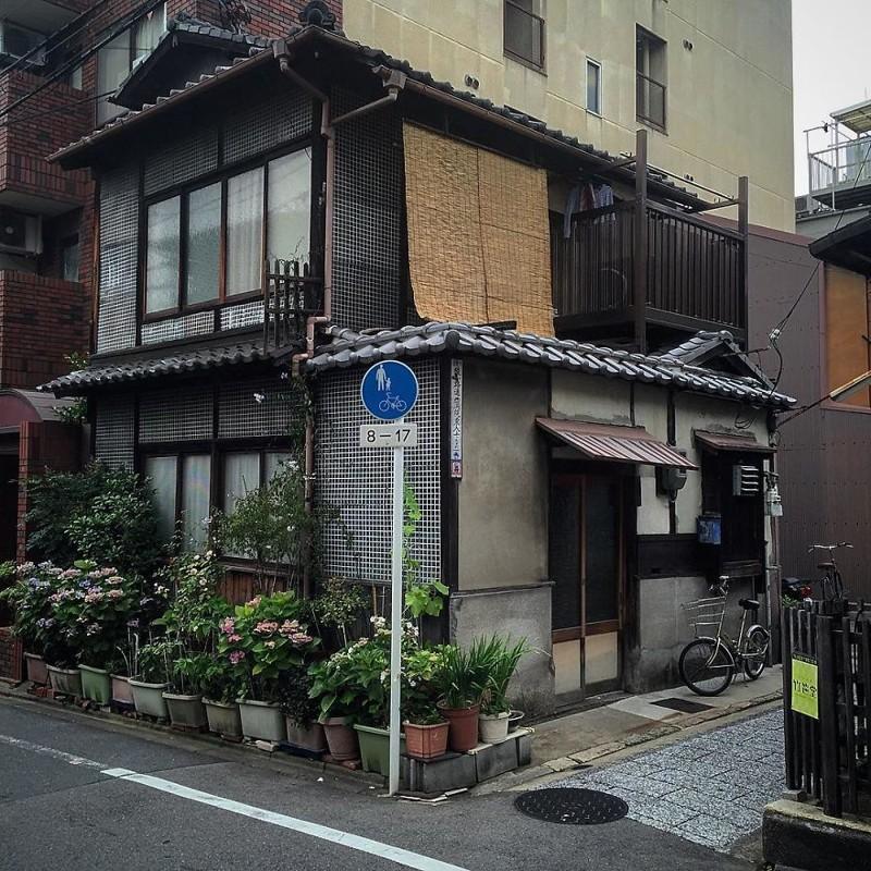 Дом с гортензиями архитектура, дома, здания, киото, маленькие здания, местный колорит, фото, япония