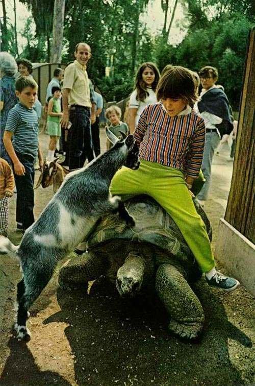 4 Можно было получить от животного ушиб. СССР, история, факты