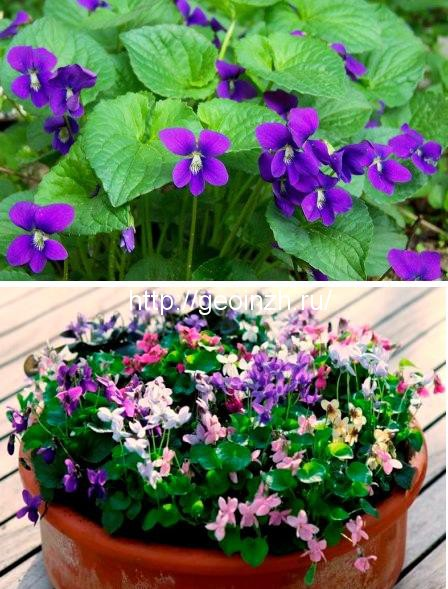 Весенние цветы для дачи