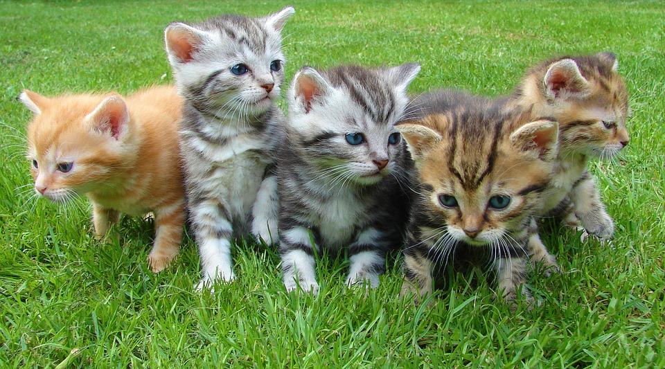 """У Кадырова попросили денег на """"дворец кошек"""" в Израиле"""